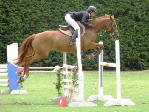 Show jumping horses for sales at Weiti Station & Stables