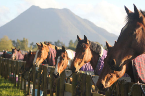 Healthy, happy sport horses at Weiti Station & Stables
