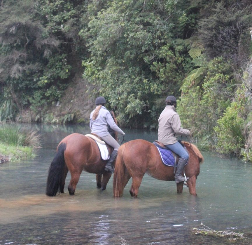 Sport horses being schooled in a river at Weiti Station & Stables