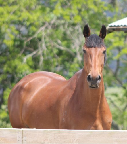 Weiti Station & Stables   Contact us