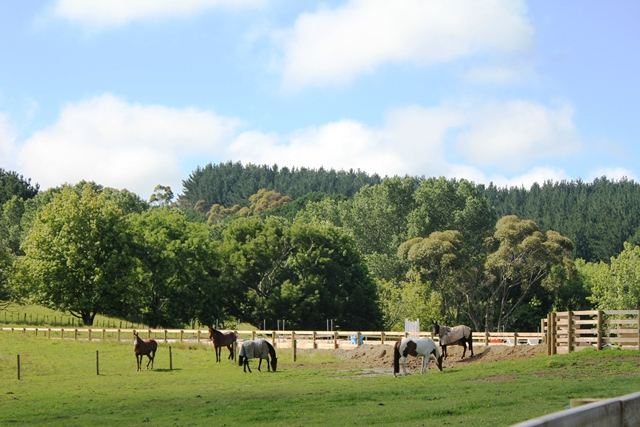 Coloured sport horses grazing at Weiti Station & Stables