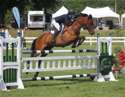 Horse schooling and training | champion show jumping horses