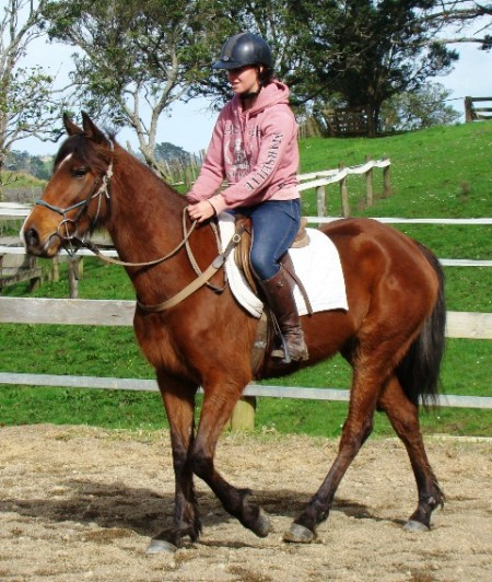 Adorable rising 5yr old filly by Bay Indoctro (Indoctro VDL) out of an Emillion VDL mare.