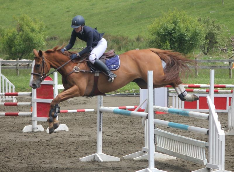 Super talented 16.1hh 9yr old mare by Powerfee out of a well performed Ngamatea mare.