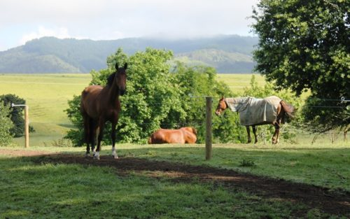 Relaxing at Weiti Waikato