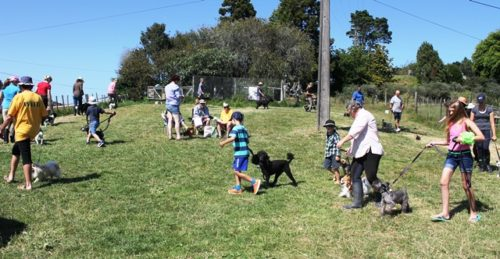 The weiti dog show (before the weiti horse show!) always a hit!
