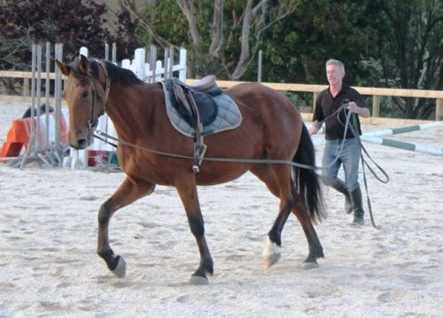 Craig Driving Indoctro/Corland filly Fiesta