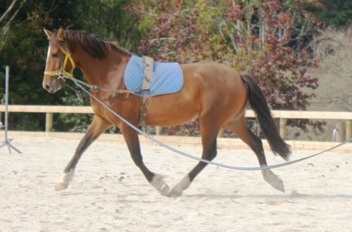 Lovely Handy Andy filly Jubilee showing of her enormous trot