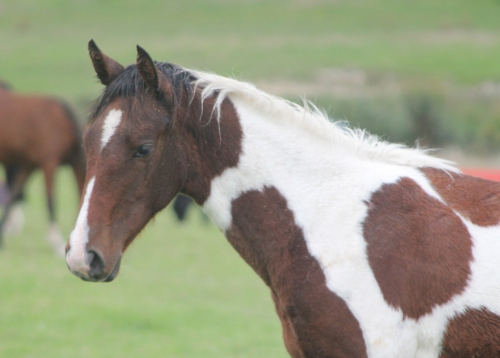 Spunky rising 3yr old gelding with great breeding.