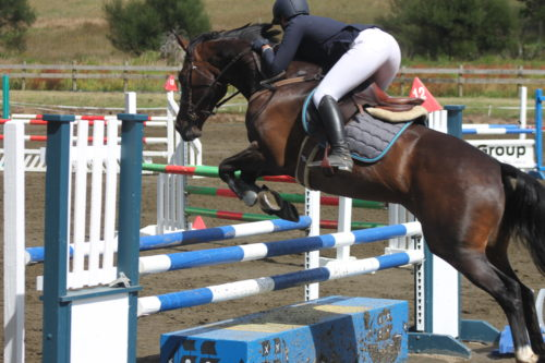 12yr old 15.3hh mare by Omkara, an honest mare who knows her job.