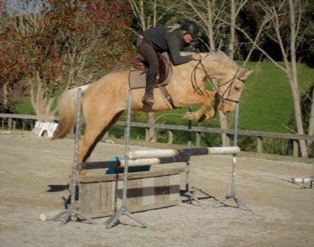 4yr old QH/TB mare, mature around 16.0hh.