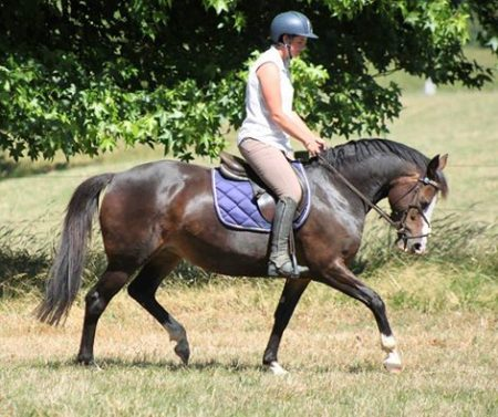 10yr old TB cross Welsh 147cm mare