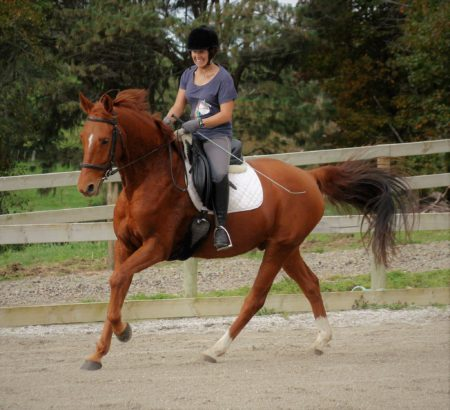 Wally | Beautiful 16.0hh 5yr old warmblood gelding by Whisper out of an Anamour mare