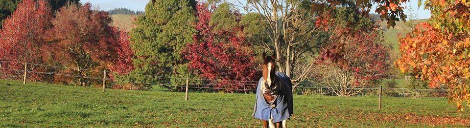 Weiti Sport Horses