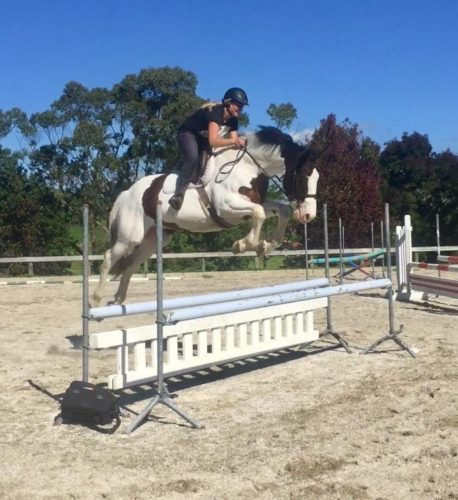 Big, talented and well bred showjumper