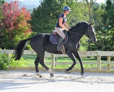 Big and beautiful 4yr old warm-blood mare by Donnerubin