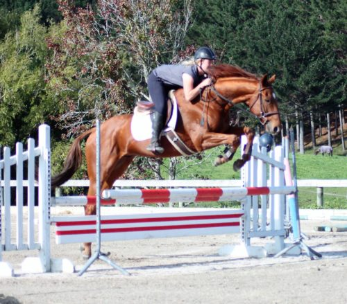 Fella 6yr old 16.2hh gelding by Faltaat