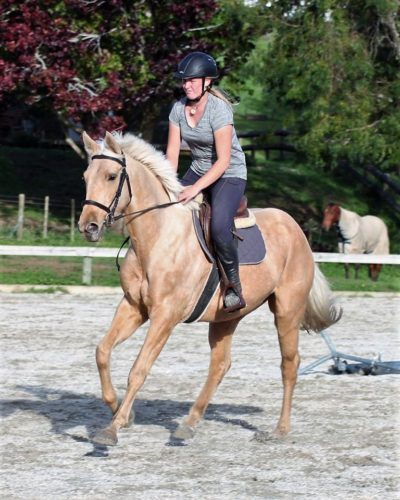 Patsy is a 4yr old QH/TB mare, mature around 16.0hh.