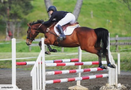Harris Tweed or George is a 16.0hh 8yr old TB gelding by Mediator.