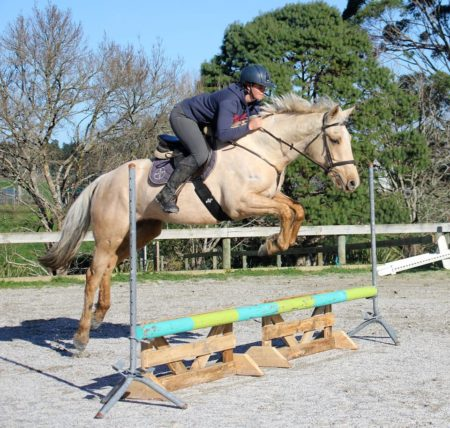 Rising 5yrs, 15.3hh, by Classic Goldcard OL, out of station bred mare