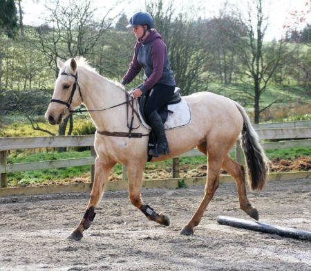 Rising 5yrs old 15.3hh by Classic Goldcard OL out of a stationbred mare