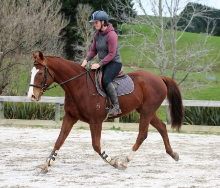 Flash Sammy, 15.3hh 7yr old TB gelding by Enemy of Average (Aus) out of a Volsraad mare (Volkster)