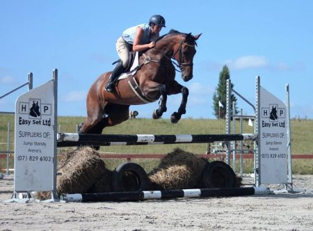 10yr old 16.2hh bay roan mare by Weiti Handy Andy out of a Valiant/ Witzbold mare.